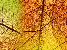 Leaf Textures HD picture 02