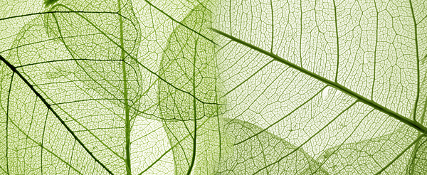Leaf Textures HD picture 03