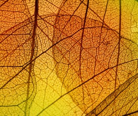 Leaf Textures HD picture 04