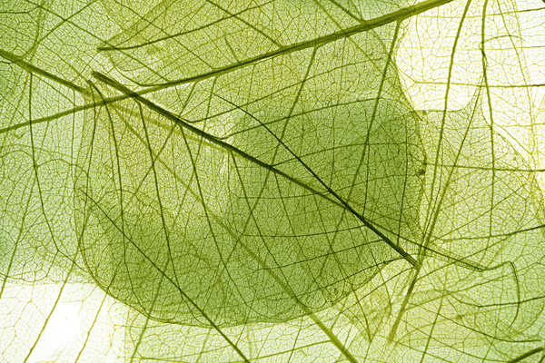 Leaf Textures HD picture 05