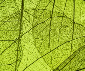 Leaf Textures HD picture 06