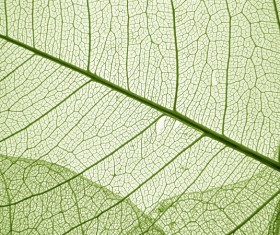 Leaf Textures HD picture 07