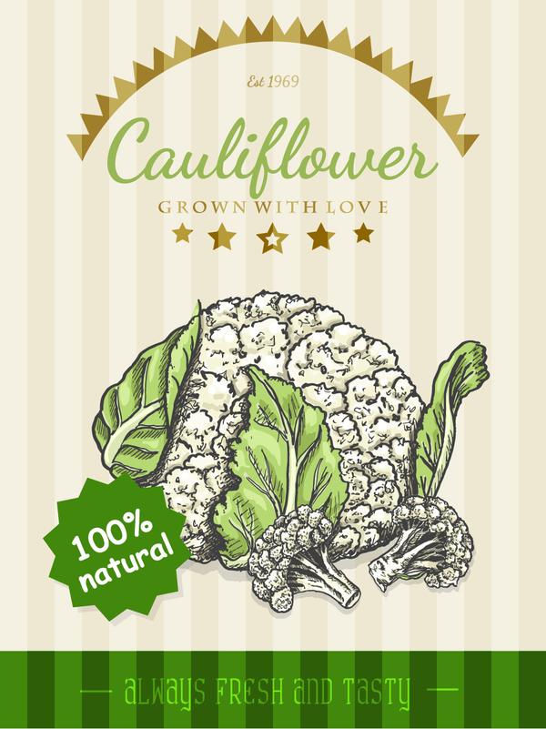 Natural cauliflower poster vector