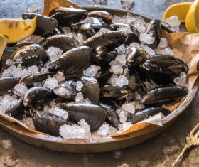 Oysters on ice with lemon Stock Photo