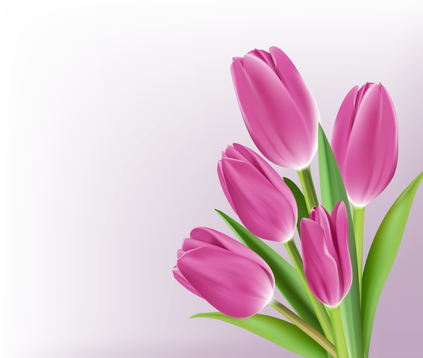 Pink tulips realistic vector
