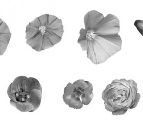 Scattering Flower Photoshop Brushes