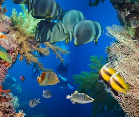 Shuttle fish in coral reefs Stock Photo