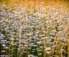 Small flowers on the meadow Stock Photo