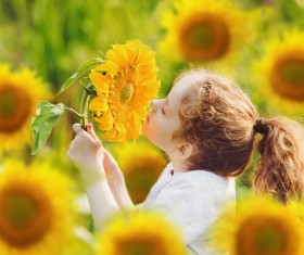 Smell the sunflower little girl HD picture