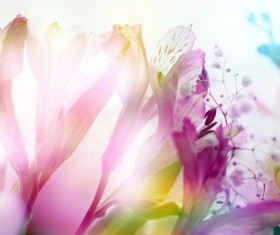 Spring blooming flowers Stock Photo