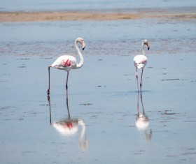 The flamingos in the lake Stock Photo 01