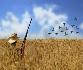 The hunter in the golden wheat field Stock Photo