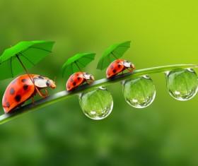 Three little ladybugs with umbrellas Stock Photo