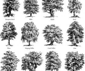 Various tree silhouette vectors set 03