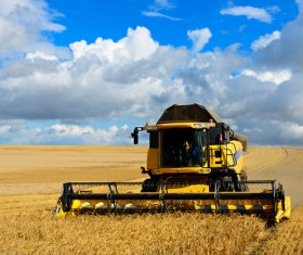 Wheat harvest Stock Photo