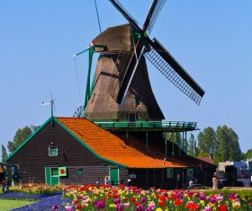 Windmill and bright tulips Stock Photo