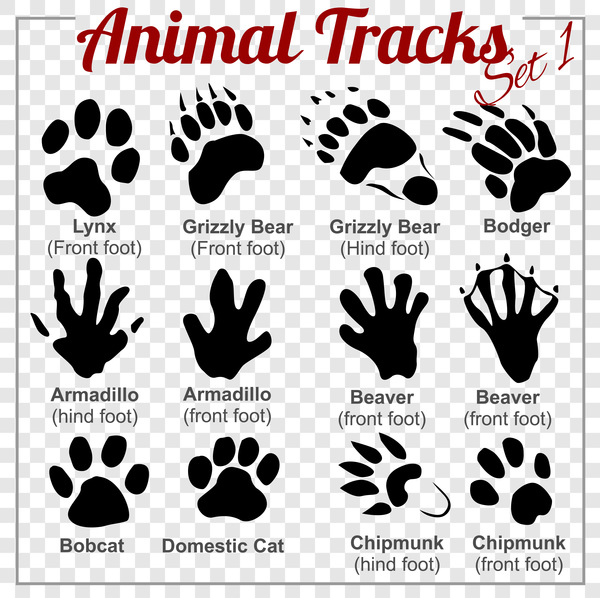 animals tracks vector material 01