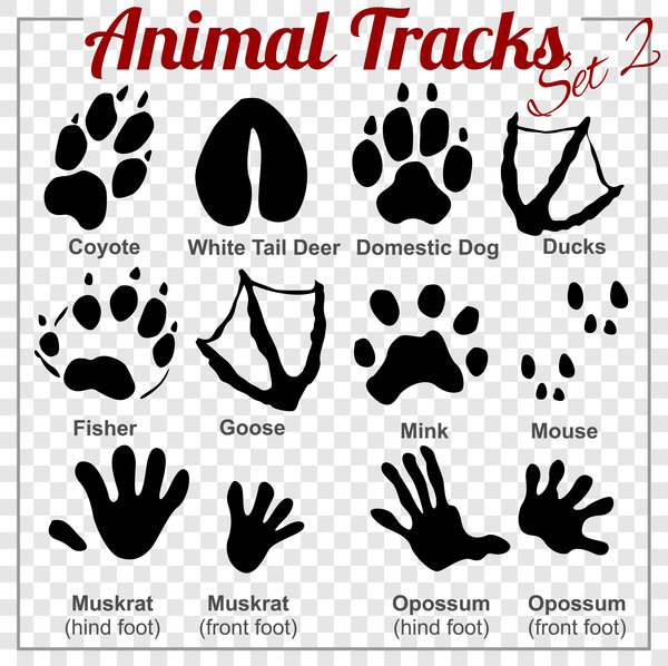animals tracks vector material 02