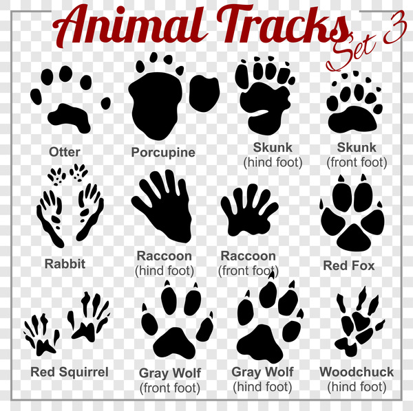 animals tracks vector material 03