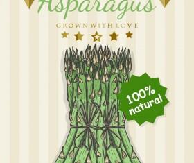 asparagus poster retro vector design