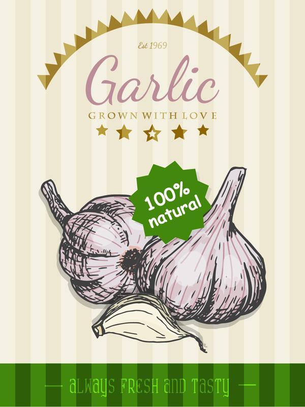 garlic poster template retro vector - Vector Cover, Vector Food ...