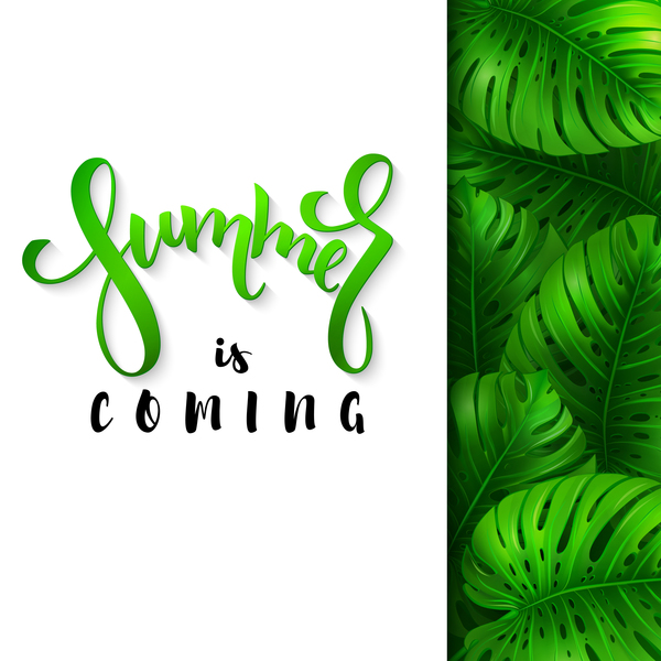 monstera leaves with summer background vector