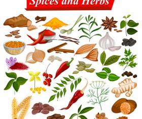spices and herbs vector design