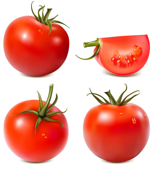4 kind tomato illustration vector