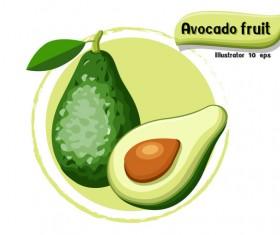 Avocado fruit illustration vector