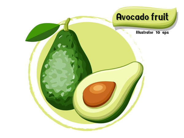 Avocado fruit illustration vector