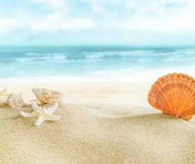 Beautiful shells on the beach HD picture