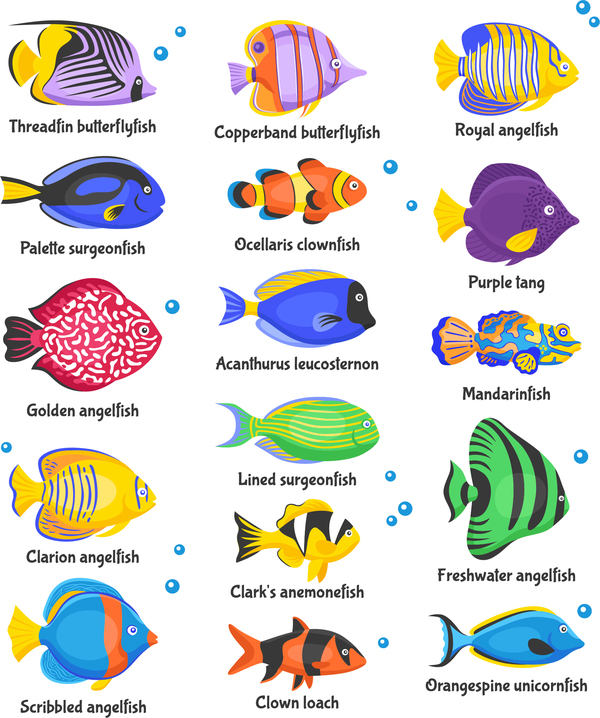 Beautiful Tropical Fish Vector Set 01 Vector Animal Free
