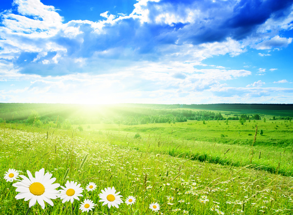 Beautiful wilderness flowers in full bloom HD picture