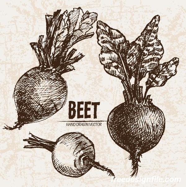 Beet hand drawing retor vector 01