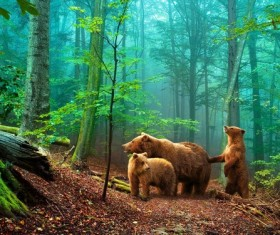 Brown bear family HD picture