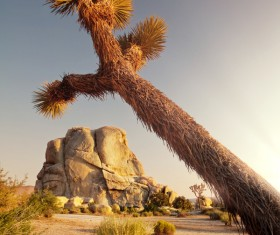 Californias desert landscape natural tree yucca Stock Photo 01