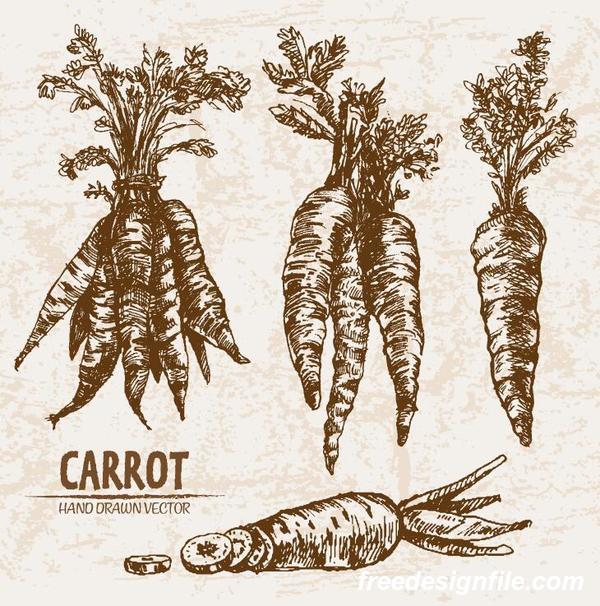 Carrot hand drawing retor vector 01