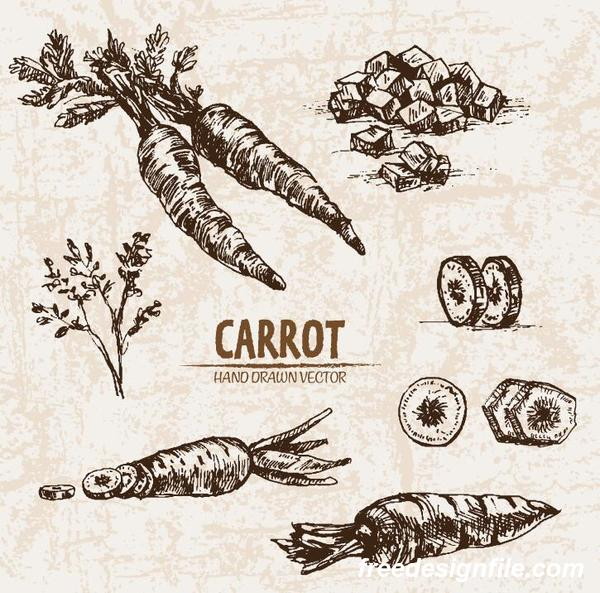 Carrot hand drawing retor vector 02