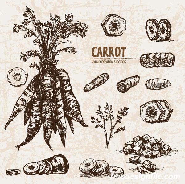 Carrot hand drawing retor vector 03