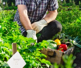 Check vegetable farmers HD picture