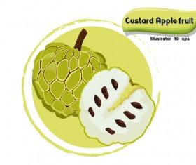 Custard apple fruit illustration vector