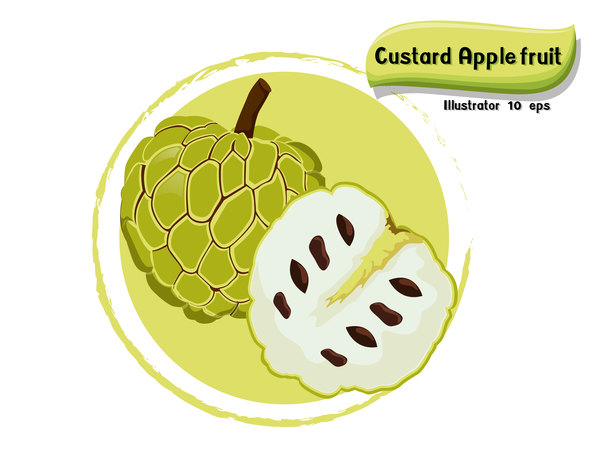 Custard apple fruit illustration vector