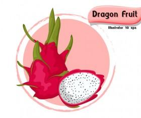 Dragon fruit illustration vector