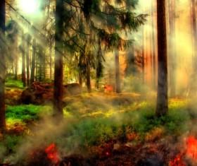 Fantasy wonderland woods landscape Stock Photo
