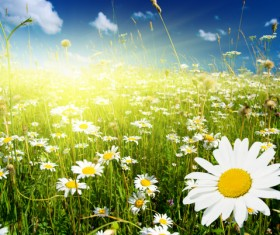 Flower grass clear sky HD picture