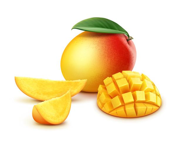 Fresh mango material vector