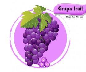 Grape fruit illustration vector