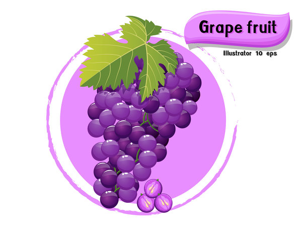 Grape fruit illustration vector