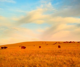 Grass and cattle on the grasslands HD picture
