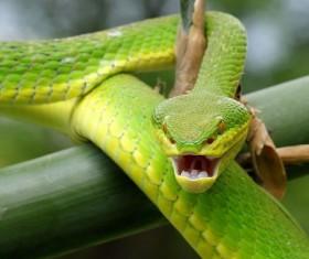 Green green snake Stock Photo